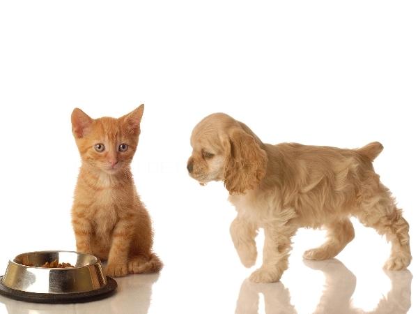 Comidas Perros y Gatos Elche Crevillent