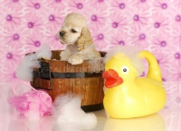 Servicio de peluquería canina y felina Elche