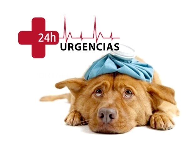 Destacado Urgencias Veterinarias en Elche
