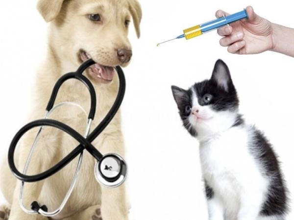 Vacunas perros y gatos Elche Crevillent