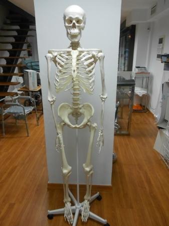 Esqueleto Humano Completo