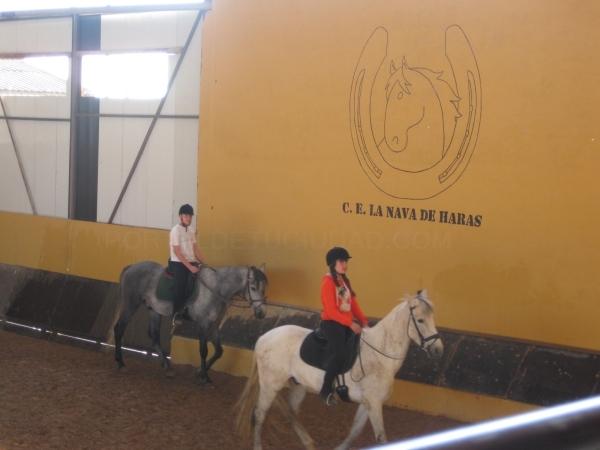 clases de caballos palencia