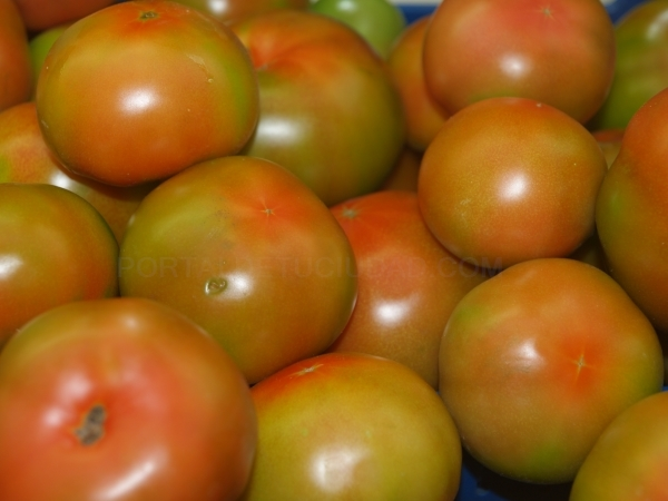 Tomates en Palencia