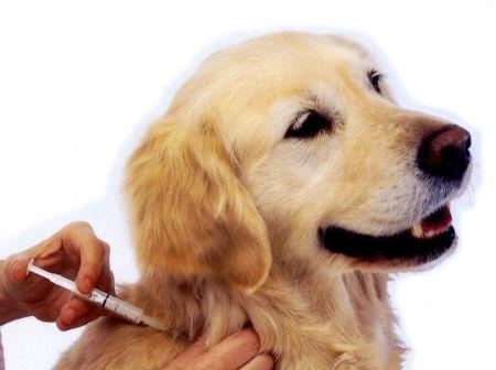 Medicina para animales en Palencia