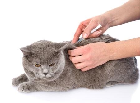 Vacunas de animales en Palencia