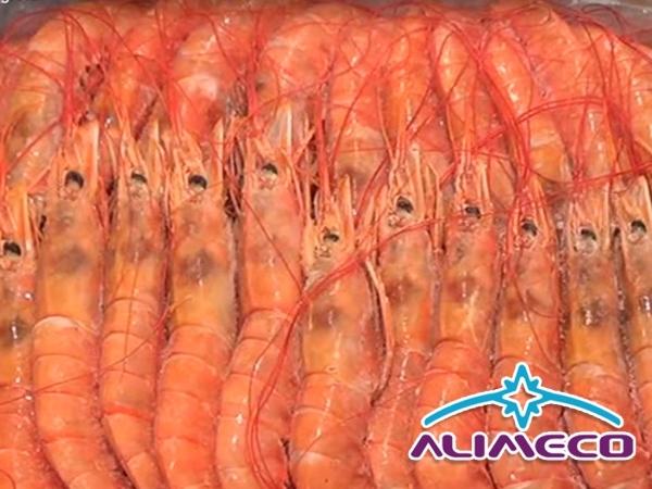 Distribuidor de mariscos congelado Torrevieja