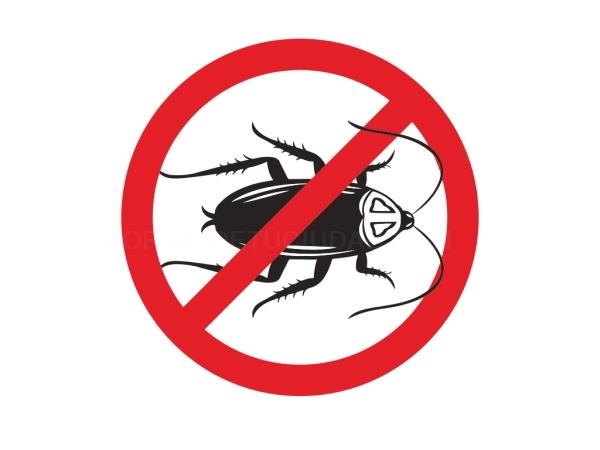 Desinsectación control de plagas Alicante Elx