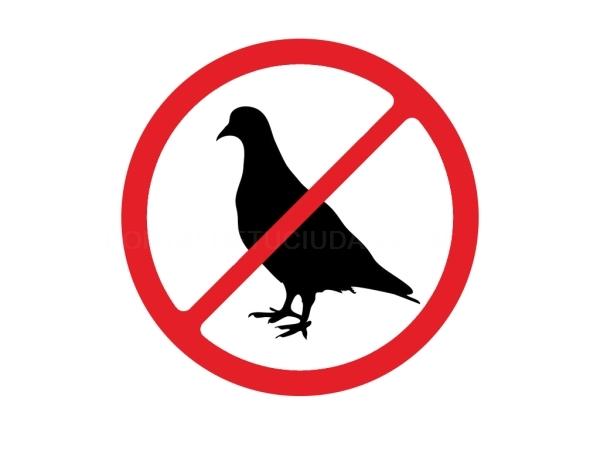 Control de plagas de aves Alicante Elche