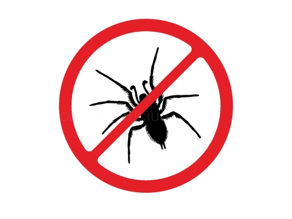 Control de plagas de polillas arañas Elche