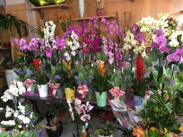 Flores día de la madre en Palencia
