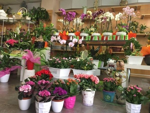 Plantas para el día de la madre en Palencia