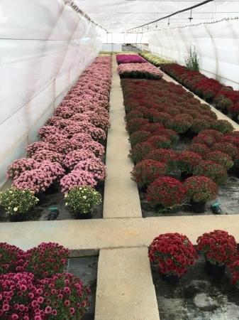 Jardinería en Palencia