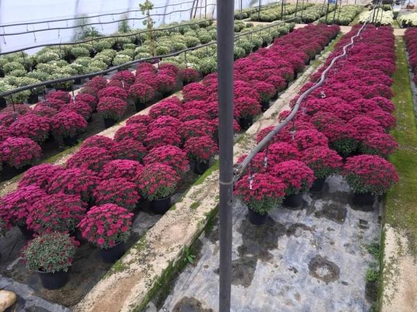 Jardinería en Venta de Baños
