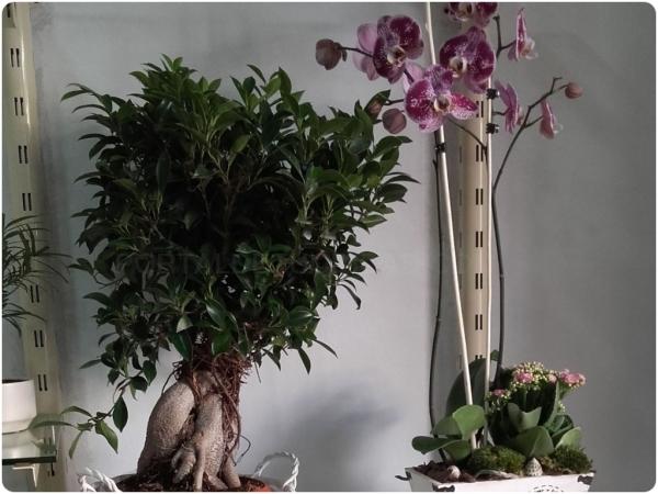 Plantas de interior y exterior en Almuñécar
