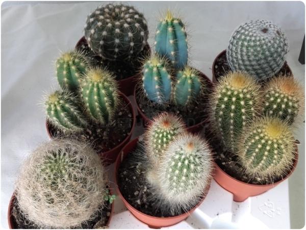 Cactus en Almuñécar
