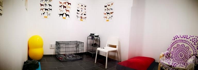 Fisioterapia de animales en Palencia