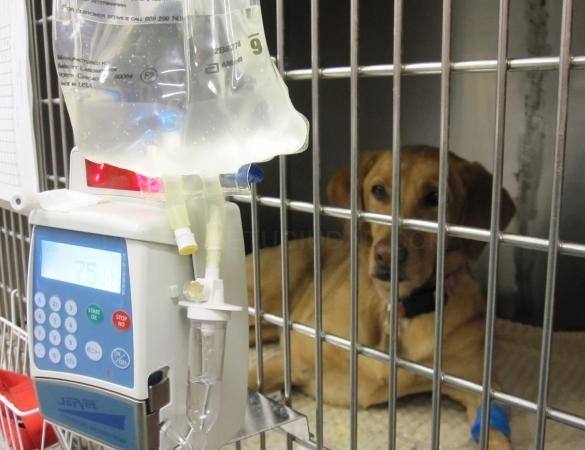 Hospitalización de animales en Palencia
