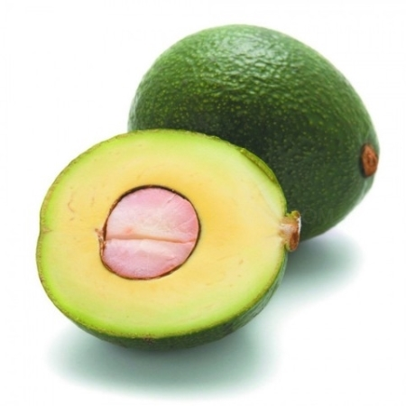 Aguacates Reed