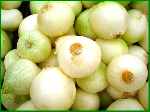 ONION: Pre-fried, Cooked and Onion Puree.