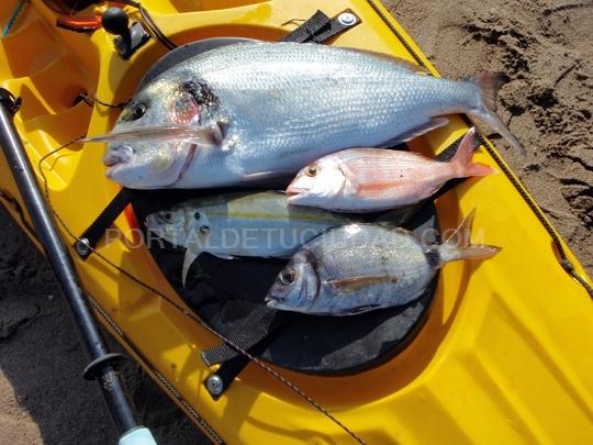 Capturas de pesca DORADA