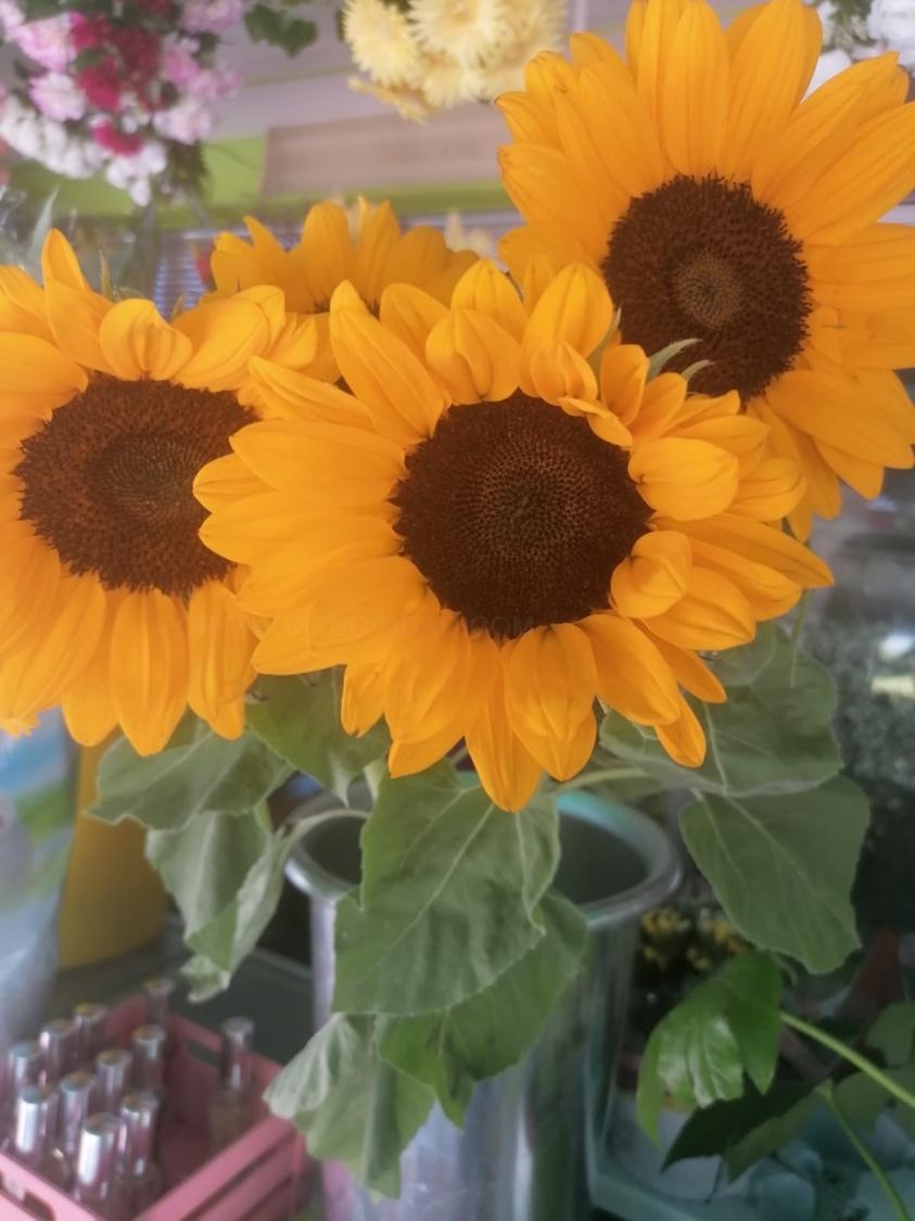 Flores cortadas girasoles