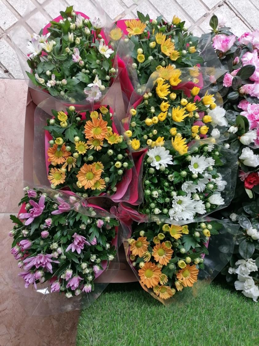 Plantas de crisantemos