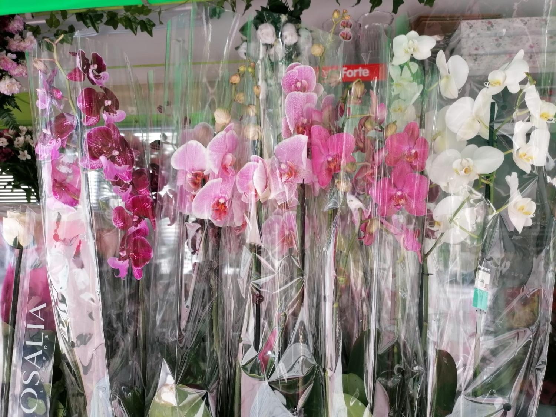 Plantas orquideas de colores
